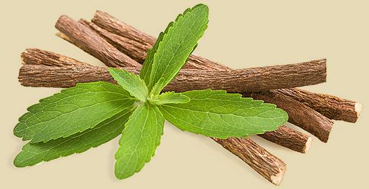 pianta di Stevia
